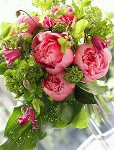 장미꽃 이미지
