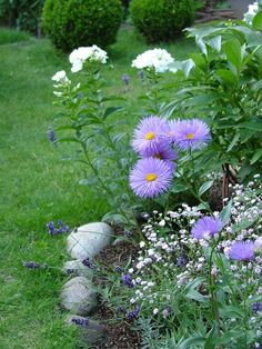 Asters with baby's breathe and phlox