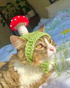 Baby Cats, Cats And Kittens, Cats In Hats, Crochet Mushroom, Mushroom Hat, Cat Aesthetic, Cat Hat, Tier Fotos, Cute Little Animals