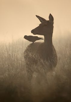 ghost-man-blues:        Raven and Deer