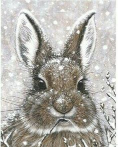 ❧ Illustrations Petits lapins ❧ by Marjolein Bastin. This was my Christmas card a few years ago! Animal Paintings, Animal Drawings, Art Drawings, Easter Drawings, Art And Illustration, Illustrations, Rabbit Illustration, Lapin Art, Marjolein Bastin