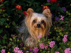 Little Dog in the Garden
