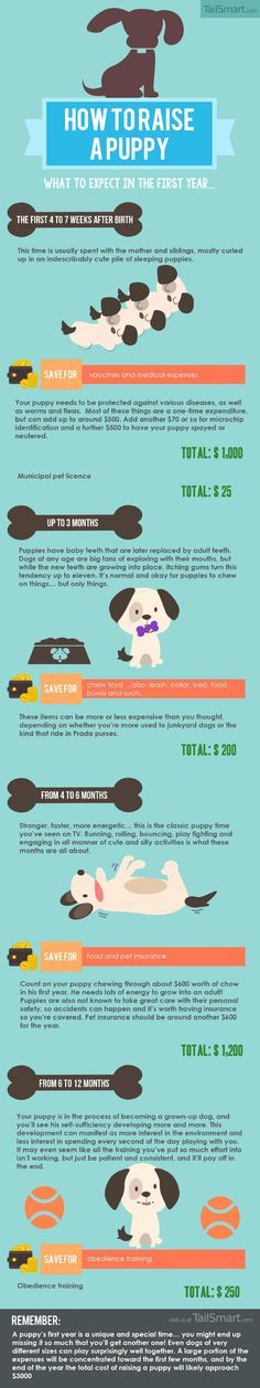 How to Raise a Puppy: What to Expect in the First Year... Infographic