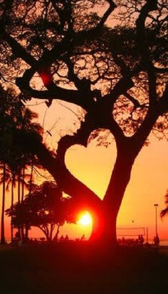heart tree - beautiful hidden heart in nature Heart In Nature, All Nature, Amazing Nature, Nature Tree, Beautiful Images Of Nature, Beauty Of Nature, Romantic Nature, Amazing Sunsets, Beautiful World