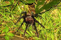 Creepy critters of Costa Rica.
