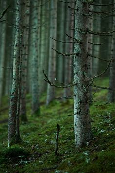 de-preciated:  The 85mm and the trees by just.like.that. on...