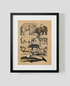 vintage animal print elephant zebra walrus hippo seal dolphin plate 6