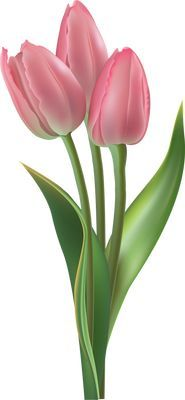 Clip Art For The Spring Season: Pink Tulips . - world of flowers Pink Tulips, Tulips Flowers, Daffodils, Spring Flowers, Beautiful Flowers, Flower Images, Flower Pictures, Flower Art, Deco Floral