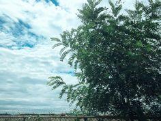 #sky #tree #leaf #cloud #blue #white #ocean #sea #하늘 #바다 #해양 #luckee