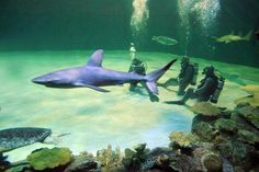 10 cool things to do in Las Vegas. Like swim with sharks