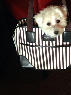 Henry Bendel doggie bag