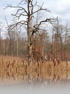 Miechowickie stawy  http://szlakiibezdroza.blogspot.com/2015/12/miechowice-po-spokoj-do-lasu-i-nad-stawy.html