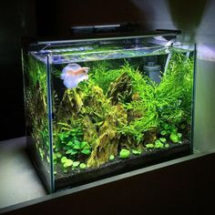 Summary: If a fish gets the basic requirements like suitable environment, clean source of water, a modest suitable diet, peaceful and uncluttered place to survive, it would scarcely fall ill or get afflicted to diseases. Aquarium Terrarium, Nature Aquarium, Aquarium Fish Tank, Planted Aquarium, Fish Tanks, Aquascaping, Betta Fish Care, Betta Tank, Pond Water Features