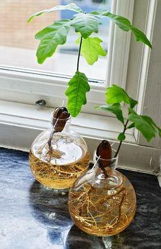 ekollon.jpg 432 × 667 pixlar #hydroponicstips #hydroponicgardening