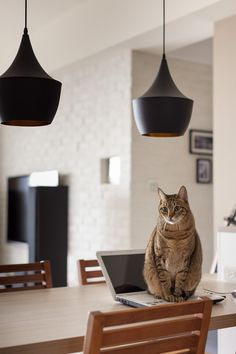 Thinking Design | Perfect Cat House