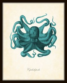 Vintage Octopus Aqua Natural History Art Print 8 x 10 Original Collage Sea Inspired Beach Decor Nautical