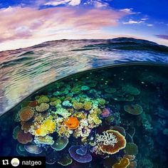 #Repost @natgeo  Photograph by @daviddoubilet Opal Reef is a sunlit coral garden off Cairns on the #GreatBarrierReef. This iconic #coralreef is actually 3000 individual reefs stretching 1400 miles along Australia's Queensland coast. It is one of the seven wonders of the world and visible from #space. I like this split image because it relates the surface to a hidden #universe below. Overfishing climate change and development have contributed to a worldwide loss of 50% coral reef habitat. Get…