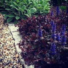Såg här såg det ut förra året på försommaren, en frodig revsuga tillsammans med stora lammöron. Efter blomningen började dock revsugan att tyna bort. Tror den står för torrt. Tips på ersättare?! #lammöron #revsuga #sjösten #gatsten #sommarträdgård #have #summergarden #sommerhave #trädgård #trädgårdsgång #hage #trädgårdsinspiration #garden #trädgårdsdesign #gardenpath #gardendesign #gardeninspiration #hagedesign #hageinspirasjon #havedesign #haveinspiration #flowers #blommor #blomster