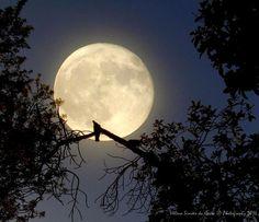 Photography: The Full Moon, Photo credits by Helena Simões da Costa © Photography 2016 (in Lisboa) (no blog do Arlindo); My other photographic works, here: http://helenasimoesdacosta.wix.com/helencostafotografia