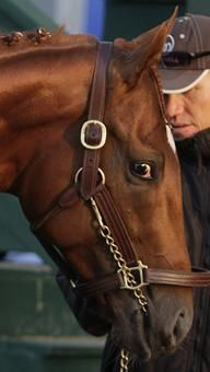 A star of Preakness week, I'll Have Another, cast a watchful eye from his barn on Preakness morning. Hours later he won the race, making him the 12th horse who will try to win the first Triple Crown since Affirmed in 1978.