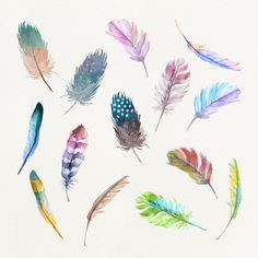 14 Watercolor Feathers Cliparts   2 Digital por PulpixelDesign