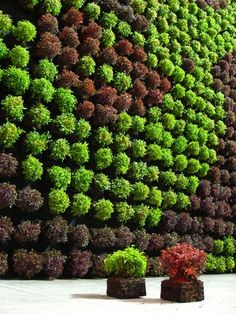 Art in vertical gardens, U can play with textures and colours