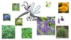 Διώξε τα κουνούπια από κήπο και βεράντα και… βάλε άρωμα!