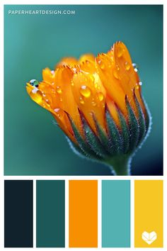 Color Palette: Outstanding Orange — Paper Heart Design Orange Color Palettes, Color Schemes Colour Palettes, Colour Pallette, Color Palate, Interior Design Color Schemes, Orange Color Schemes, Orange Palette, Modern Colors, Teal Colors