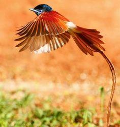 Самые красивые птицы мира