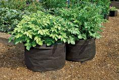 Jumbo Potato Grow Bag Thinking I may try this next time.