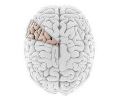 Nine Stubborn Brain Myths That Just Wont Die, Debunked by Science
