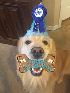 Post with 0 votes and 904 views. Dog First Birthday, Puppy Birthday, Bear Birthday, Dog Grooming Shop, Small Dog Clothes, Cute Dogs And Puppies, Doggies, Puppy Party, Happy Puppy