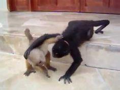 Monkey VS Dog very funny video