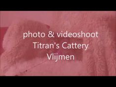 Titran's cats in a photoshoot Cattery, Photoshoot, Cats, Gatos, Photo Shoot, Cat, Kitty, Photography
