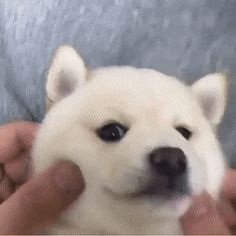 Cut Animals, Cute Baby Animals, Cute Love Memes, Kitten Gif, Cute Owl, Shiba Inu, Best Funny Pictures, Cute Babies, Dog Lovers