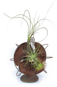 """Tillandsias, or """"air plants"""" have so many things going for them it's surprising they're not more popular. They possess a rare beauty that reminds me more of undersea creatur… Unusual Plants, Cool Plants, Air Plants, Air Plant Display, Plant Decor, Inside Garden, Iron Plant, Best Indoor Plants, Garden Landscape Design"""
