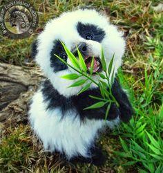 Panda cub, how cute is this!