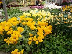 ... Gardens, Flowers, Plants, Garden, Flora, Plant, Royal Icing Flowers, Flower, Garden Types