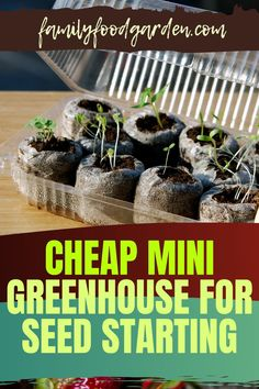Instead of buying seeds for the garden consider starting your own seeds. It's fun and cheap. Family Food & Garden provides you with a comprehensive guide with a checklist to shop for what you need to buy to put together a mini greenhouse for seed starting. There are numerous ideas to build a DIY mini (and even) portable greenhouse. With so many options you are bound to find the right set up that suits you best. Remember to have fun! Learn more… #diygreenhouse #minigreenhouse #seedstarting Portable Greenhouse, Indoor Greenhouse, Healthy Fruits And Vegetables, Buy Seeds, Seed Starting, Small Plants, Family Meals, Gardening Tips, Herbs