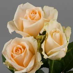 Peach Avalanche Roses  - the picture doesn't do the classy colour justice but just an idea?