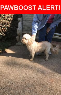 Is this your lost pet? Found in Charlotte, NC 28210. Please spread the word so we can find the owner!  White Maltipoo (?), older, extremely friendly.  No collar.    Nearest Address: Near Pemberton Dr & Ashton Dr