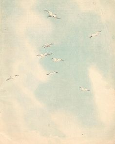 sky watercolor background old paper texture seagulls by sskalinka, $1.90