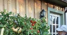 Vertical gardening – it maximizes your harvest, makes the most of limited space, doesn't require lots of bending, and keeps your veggies a...