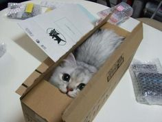 """23 Reasons Why """"If It Fits, I Sits"""" Photos Are the Best Thing on the Internet // iT MAKING THE :3 FACE IS NEPETA"""