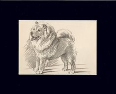 """Chow-Chow Dog by Lucy Dawson 8X10"""" Matted Print"""