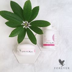 After being exposed to the sunbeams your face would appreciate a restart. Make a face mask with Forevers Face Mask Powder and Forever Activator. Enjoy your spa moment! http://mls.flp.com English http://aloi.st Scandinavia #salvevitae #purposedriven #Forever #Aloe