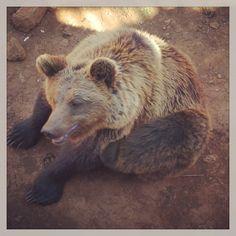 #osos #oso #osopardo #osospardos #animals #animales #animal #cabarceno #cantabria
