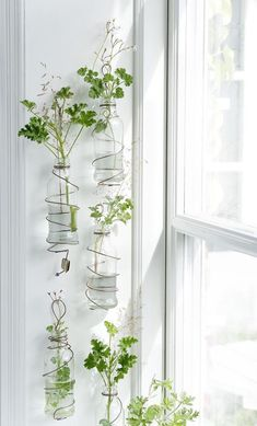 37 Indoor Water Garden Ideas That Refresh Your Interiors Adding water features and indoor plants is a great way to freshen up the room. There are several types of plants that you can grow that are included in tropical Water Garden Plants, Indoor Water Garden, Indoor Plants, Water Gardens, Wall Hanging Plants Indoor, Diy Wall Planter, Vertical Wall Planters, Planter Pots, Planter Ideas