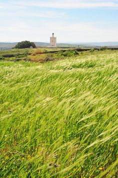 young wheat under wind in front of a small mosque, Jemaa, Morocco.  Photo: luca.gargano via Flickr.