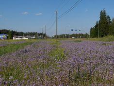 Täyttä kukintaa, Mäntsälä 3 - Full blooming, Mäntsälä (Finland) 3.